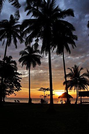 Palmen Wandbilder