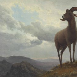 Albert-Bierstadt-Long-Horned-Sheep