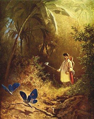 Carl Spitzweg Der Schmetterlingsfaenger Wandbilder