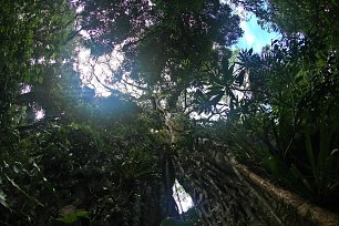 Wald in Costa Rica Wandbild