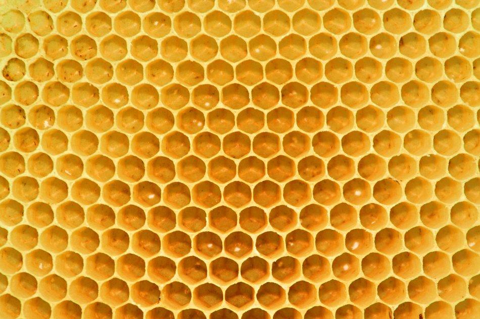 Bienenwaben Honig Bild auf Leinwand / Acrylglas / Kunstdruck kaufen